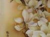 magnolia_r_323_850